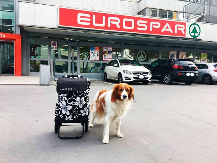I cani al supermercato in Friuli Venezia Giulia
