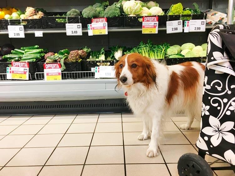 Il cane al supermercato
